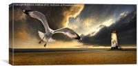 soaring inshore #2, Canvas Print