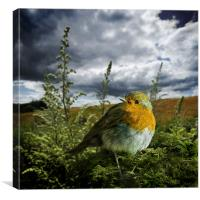 european robin 2., Canvas Print