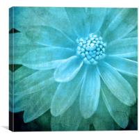textured dahlia in blue, Canvas Print