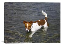 Jack Russell dog in the sea, Canvas Print