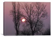 Early morning sun, Canvas Print