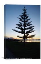 Norfolk Island Pine NZ, Canvas Print