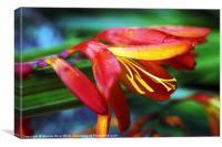 Colourful Flower, Canvas Print