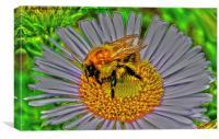 Bee on flower, Canvas Print