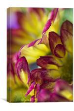 red yellow chrysanthemum, Canvas Print