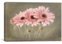 Pink Gerberas, Canvas Print
