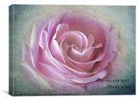 A Rose in the heart of rose, Canvas Print