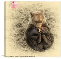 Bear Cub, Canvas Print