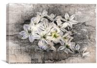 Allium Greys, Canvas Print