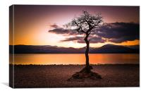 Lone Tree Bay, Canvas Print