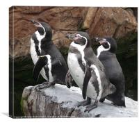Penguins ready to dive, Canvas Print