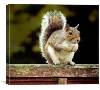 Squirrel, Canvas Print