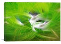 Green sage, Canvas Print