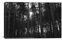 Afternoon sun through the woods, Canvas Print