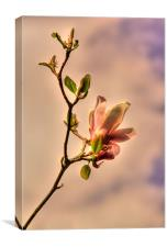 Magnolia Pink, Canvas Print