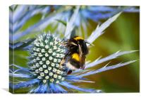 Bumbling around!, Canvas Print