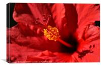 Hawaiian Rouge Hibiscus, Canvas Print