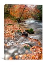 Winding away to Fingle Bridge, Canvas Print