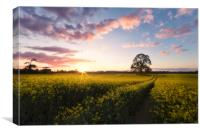 Kingston Lacy Sundown, Canvas Print