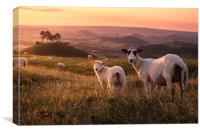 Colmer's Flock, Canvas Print