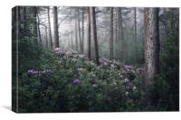 Rhoddies in the Mist, Canvas Print