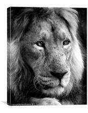 Panthera Leo, Canvas Print