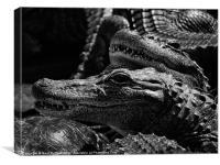 'Gators, Canvas Print