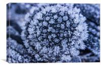 Ice Flower, Canvas Print