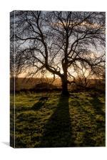 Morning Shadows, Canvas Print