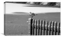 Lonesome bird on the lake, Canvas Print
