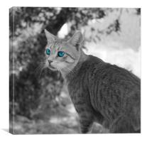 Blue eyed cat, Canvas Print