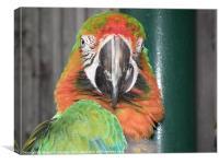 Parrot, Canvas Print