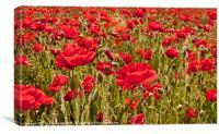 Sussex Poppy Field, Canvas Print