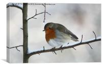 Robin Red-Breast, Canvas Print