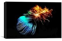 Abstract Peacock Feather, Canvas Print