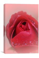 Red Red Rose..., Canvas Print