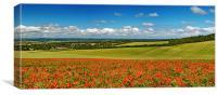 Sussex Poppy Panorama, Canvas Print