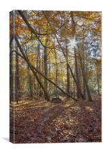 Pulborough Leaves, Canvas Print