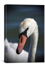 Me? A Swan?, Canvas Print