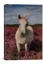 Outstanding In His Field, Canvas Print