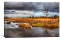 New Forest, Canvas Print