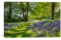 Arlington Bluebell Woods, Canvas Print