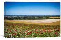 Summer Poppies At Firle, Canvas Print