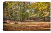 Autumn In An English Woodland, Canvas Print
