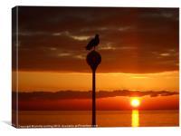 Seagull Sunrise, Canvas Print