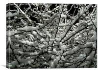 Snow Bush, Canvas Print