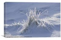Iced Grass, Canvas Print