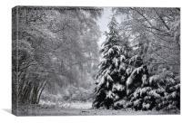 Sherwood Winter, Canvas Print