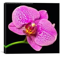Purple Orchid Bloom, Canvas Print