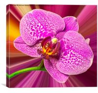 Bright Orchid, Canvas Print